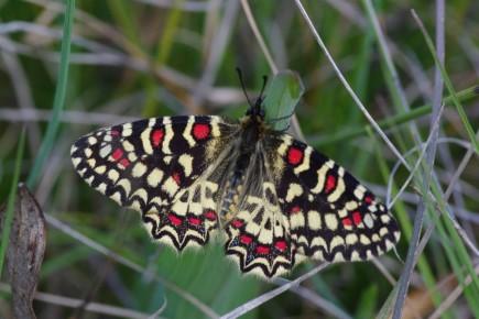 Activitat papallones TRESCALIA