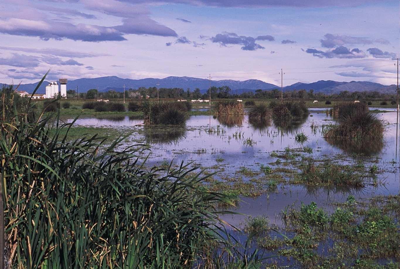 Empordà wetlands Natural Park
